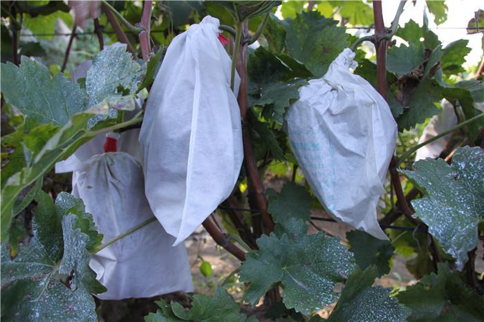 水guotao袋专用无纺布
