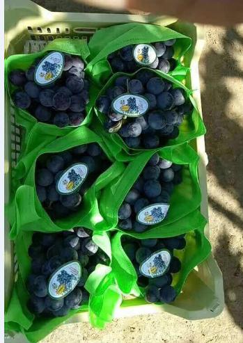 水果套袋万博manbetx官网入口